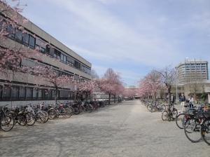 Semestre Erasmus à Göttingen